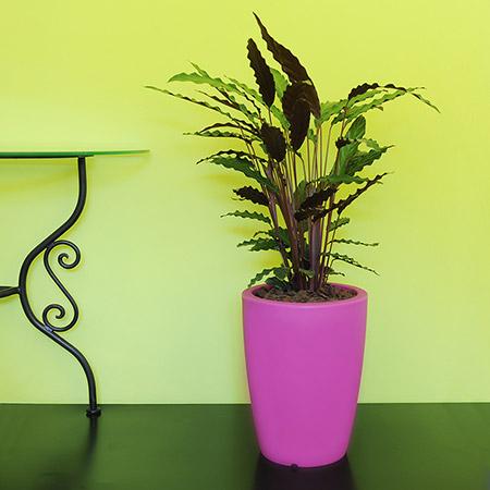 Fioriera da giardino in resina ORCHIDEA