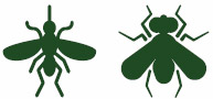 Tipologia insetti catturabili